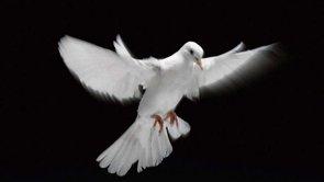 Courtesy of John Cole The Holy Spirit
