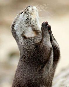 Otter Praying by Pinterest