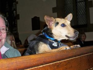 Animal Blessing Service St Peter's Church Rawdon, England
