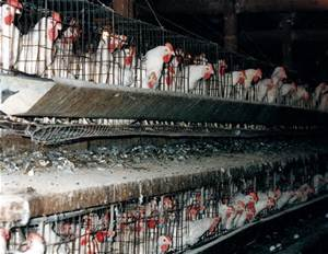 Factory Farm Internet Photo